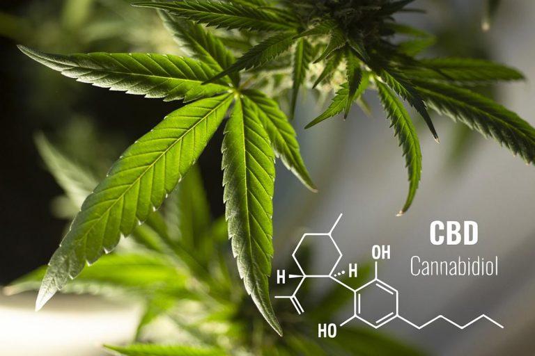 Sklep zasobny w artykuły do hodowli marihuany