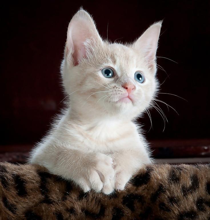 Co zrobić żeby wasz kot nie wypadł z balkonu?